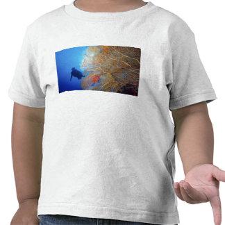 Gorgonian sea fan, Subergorgia mollis, with Tee Shirt