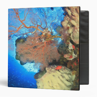 Gorgonian sea fans, Gunung Api Island, Banda Binder