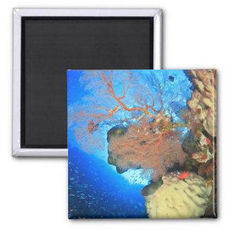 Gorgonian sea fans, Gunung Api Island, Banda Magnet