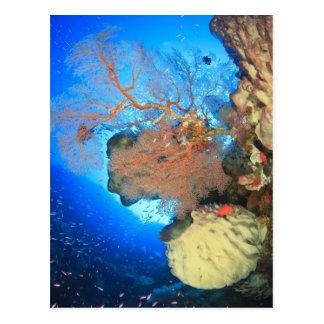 Gorgonian sea fans, Gunung Api Island, Banda Postcard