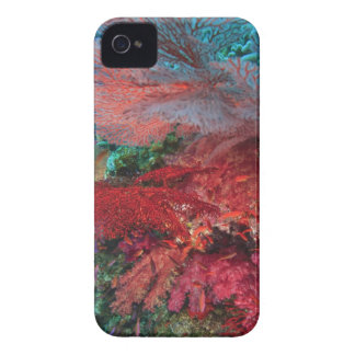 Gorgonian Sea Fans, soft corals, Bligh Water, Case-Mate iPhone 4 Case