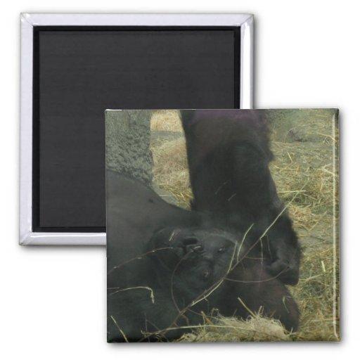 Gorila 2 imanes de nevera