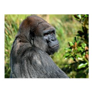 Gorila adulto tarjeta postal