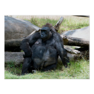 Gorila agujereado póster