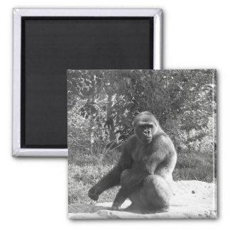 gorila b y w imán cuadrado