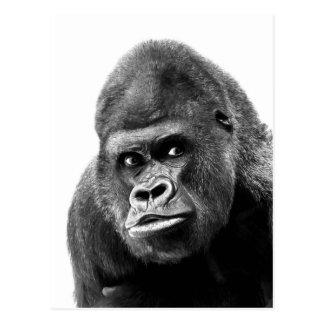 Gorila blanco negro tarjeta postal