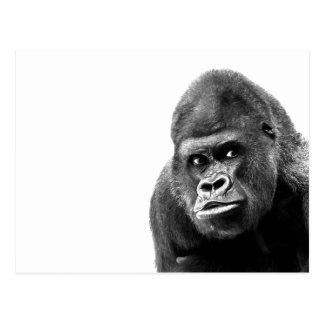 Gorila blanco negro tarjetas postales