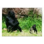 Gorila de la madre que mira a su bebé del bebé de  felicitacion