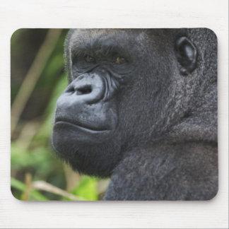 Gorila de la tierra baja del Silverback, cautivo d Alfombrillas De Ratones