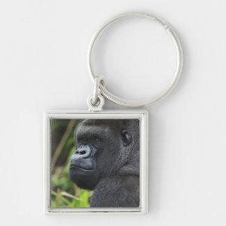 Gorila de la tierra baja del Silverback cautivo d Llaveros