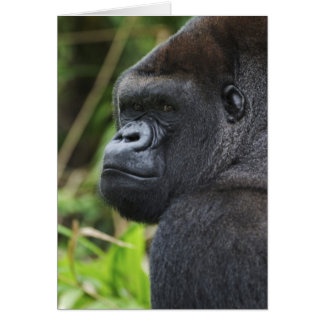 Gorila de la tierra baja del Silverback, cautivo d Tarjetón