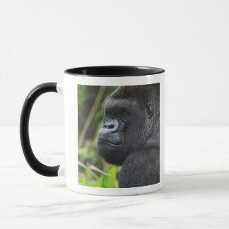 Gorila de la tierra baja del Silverback, cautivo Taza