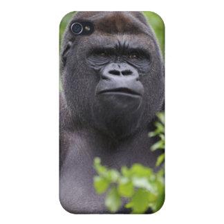 Gorila de la tierra baja del Silverback, gorila de iPhone 4 Funda