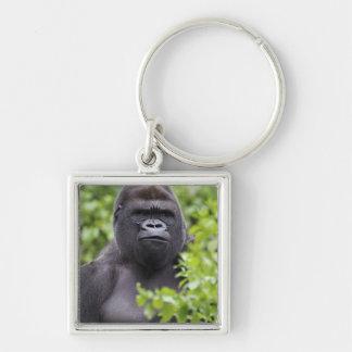 Gorila de la tierra baja del Silverback gorila de Llaveros
