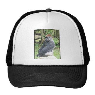 Gorila de la tierra baja en actitud que se sienta gorras de camionero