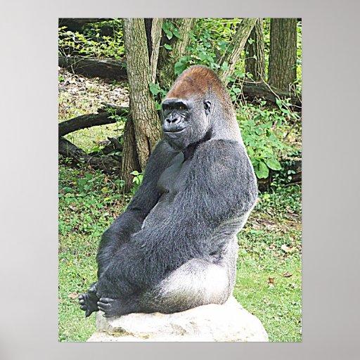 Gorila de la tierra baja en actitud que se sienta impresiones