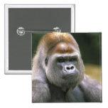 Gorila de la tierra baja. Gorila del gorila Pins