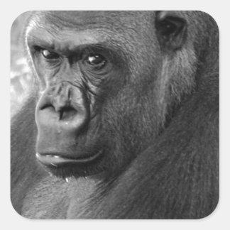 Gorila de la tierra baja pegatina cuadrada