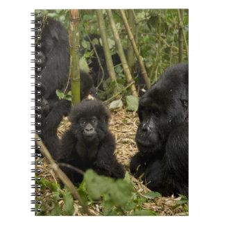 Gorila de montaña, adulto con los jóvenes 2 libros de apuntes