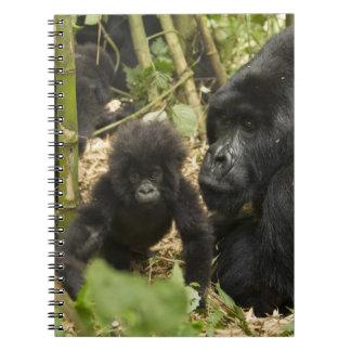 Gorila de montaña, adulto con los jóvenes libros de apuntes