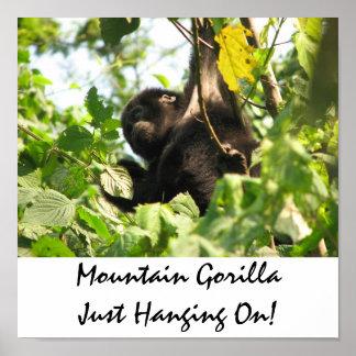 ¡Gorila de montaña apenas que cuelga encendido! Póster