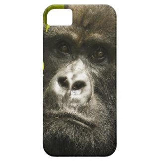 Gorila de montaña, beringei del beringei del iPhone 5 fundas