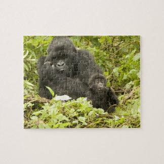 Gorila de montaña, beringei del gorila (antes G. Rompecabeza