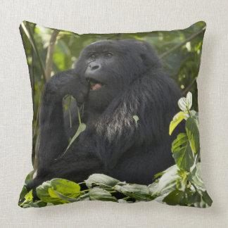 Gorila de montaña, blackback, comiendo cojín decorativo