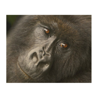 Gorila de montaña femenino impresiones en madera