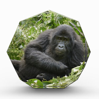 gorila de montaña joven fresco