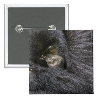 Gorila de montaña juvenil 3 pin cuadrado