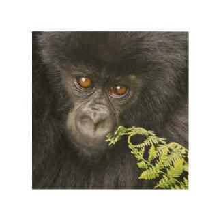 Gorila de montaña juvenil cuadro de madera