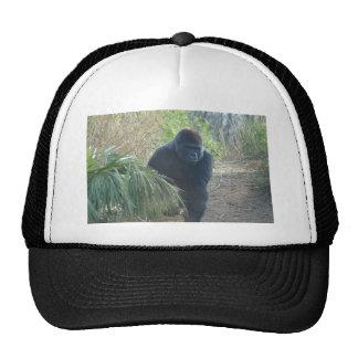 Gorila de montaña magnífico gorras