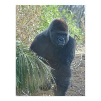 Gorila de montaña magnífico postal
