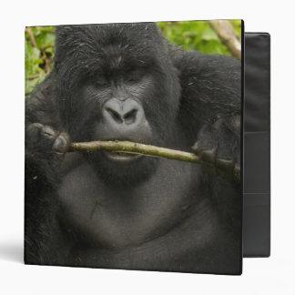 """Gorila de montaña, usando las herramientas carpeta 1 1/2"""""""