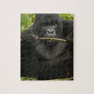 Gorila de montaña, usando las herramientas puzzle
