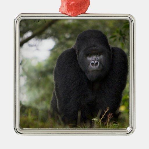 Gorila de montaña y Silverback 3 Adorno Navideño Cuadrado De Metal
