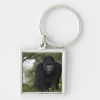 Gorila de montaña y Silverback 3 Llavero
