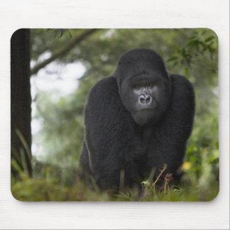 Gorila de montaña y Silverback 3 Tapetes De Ratones