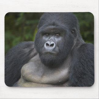 Gorila de montaña y Silverback 4 Tapetes De Ratón