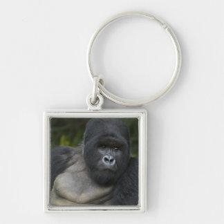 Gorila de montaña y Silverback 5 Llaveros
