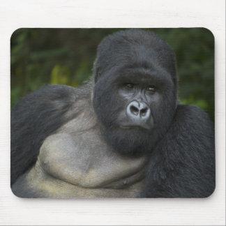 Gorila de montaña y Silverback 5 Alfombrillas De Ratón