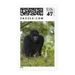 Gorila de montaña y Silverback 6 Sello