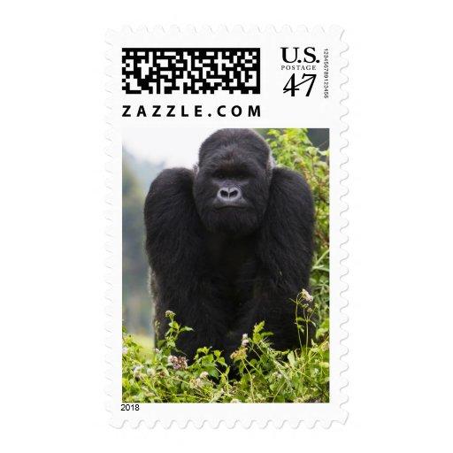 Gorila de montaña y Silverback Estampillas