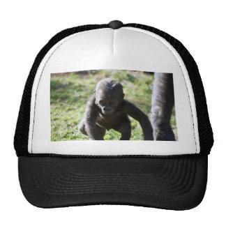 Gorila del bebé gorras