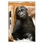 Gorila del bebé pizarra blanca