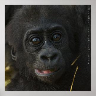 Gorila del bebé, por Gary Dorking Póster