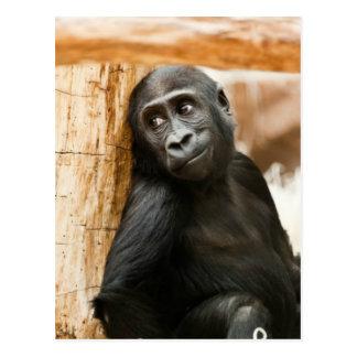 Gorila del bebé postal