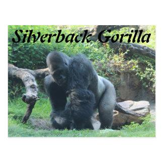 Gorila del Silverback # 1 Tarjetas Postales