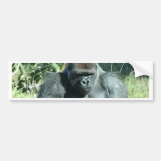 Gorila del Silverback Etiqueta De Parachoque